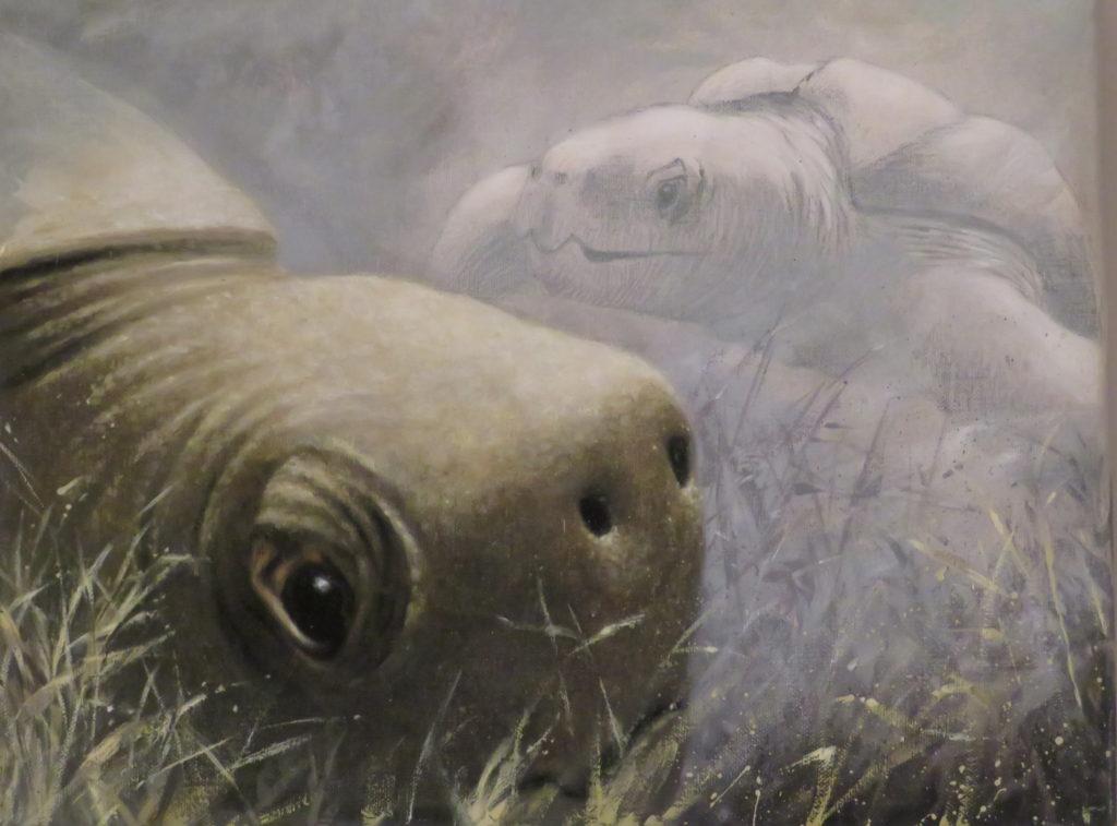 Blyerts och olja, om utrotningshotade arter. Jättehavssköldpaddorna är alla hotade.Konstnär Anna Toresdotter